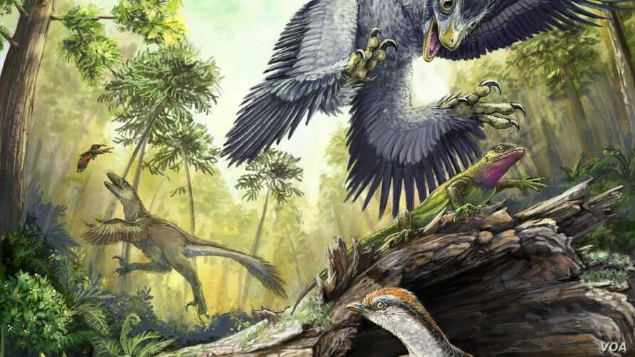 A number of bird-like dinosaurs reconstructed in their environment in the Hell Creek Formation at the end of the Cretaceous. Middle ground and background: two different dromaeosaurid species hunting vertebrate prey (a lizard and a toothed bird). Fore