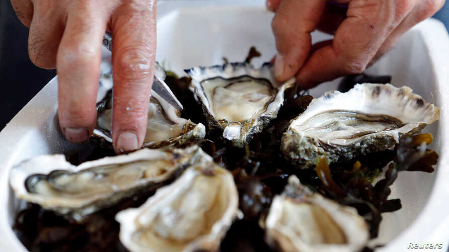 Oysters are pictured on the Re Island, where an automatic oyster vending machine is set at l'huitriere de Re in Ars en Re, Southwestern France, Aug. 2, 2017.