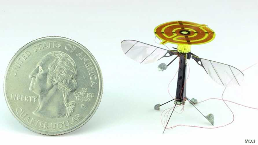 A RoboBee is seen next to a quarter. The static electric electrode is seen on the top of the tiny drone. (AAAS)
