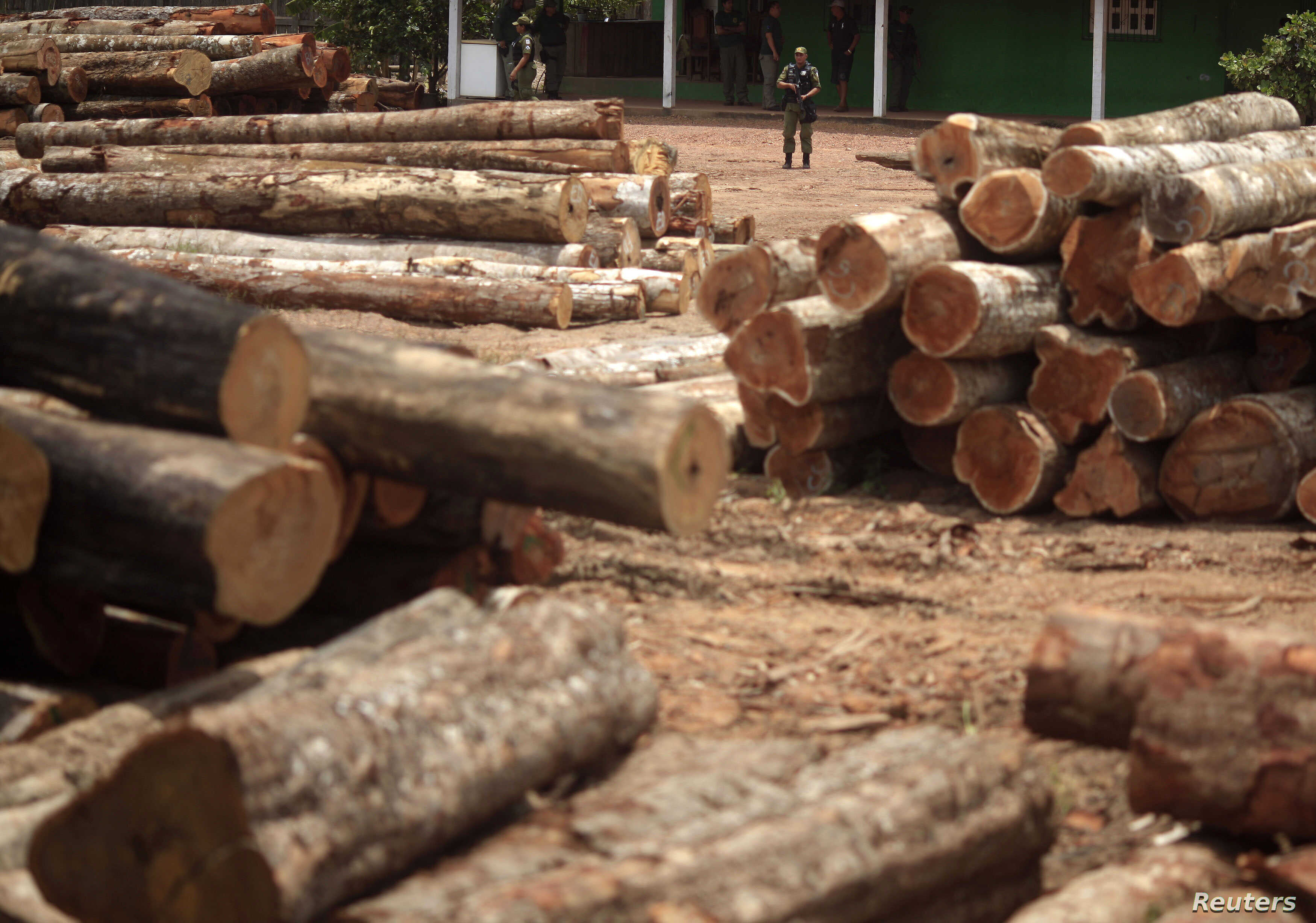 Brazilian officers guard a yard filled with trees which were illegally logged from the Amazon rainforest in Nova Esperanca do Piria, Para state, September 25, 2013.