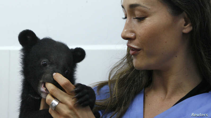 Actress Maggie Q, a goodwill ambassador for Moon Bear Rescue Vietnam, plays with an Asiatic black bear cub at the Vietnam Bear Rescue Centre in Tam Dao National Park, north of Hanoi May 14, 2009.