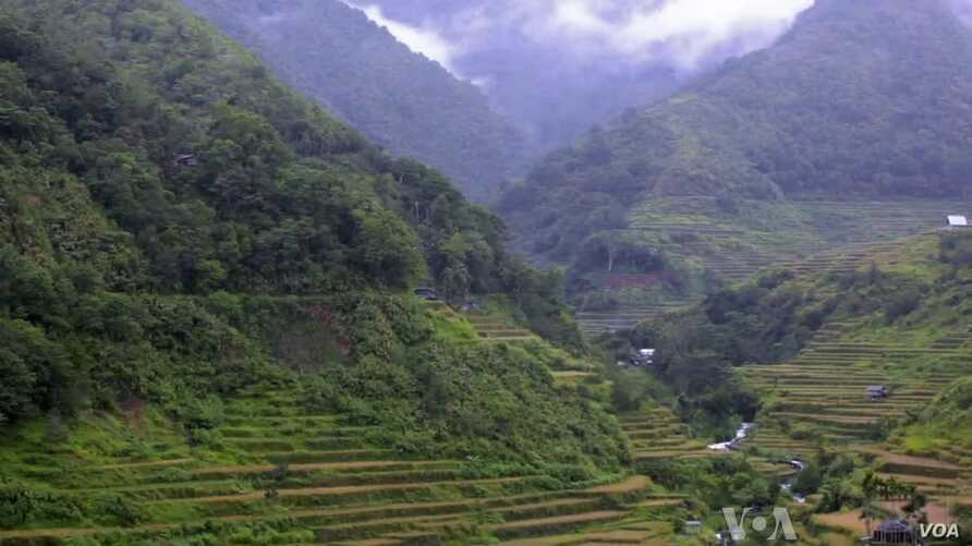 The Ifugaos of the Cordillera region in northern Philippines are known as the builders of the area's UNESCO heritage rice-terraces.