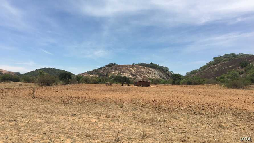 Despite forecasts of above-average rainfall, some of parts of Zimbabwe have yet to receive rains a month after the beginning of the season. Here in rural Gutu, Zimbabwe, about 300 kilometers south of Harare, farmers did dry planting in November and a...