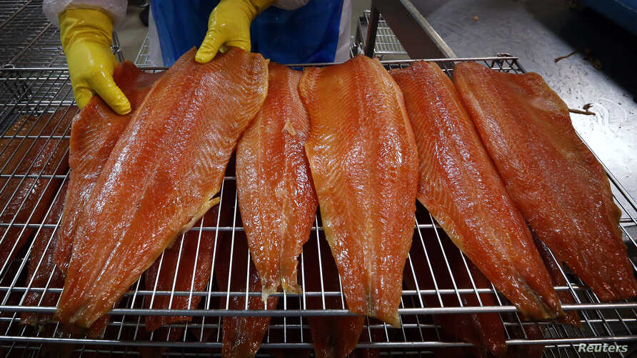 FILE - A worker inspects salmon fillets at processing plant. Genetically modified versions of the fish have just been approved by U.S. regulators for human consumption.