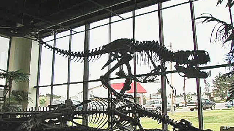 Dinosaur researchers have made giant strides in recent years, however they know that the vast majority of dinosaur specimens have yet to be discovered