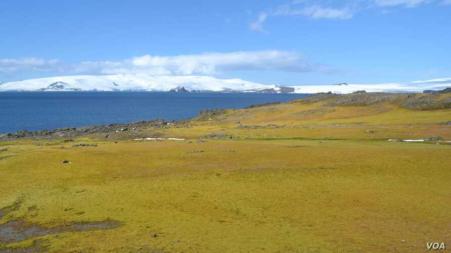Researchers say the Antarctic Peninsula is rapidly greening due to climate change. (Matt Amesbury)