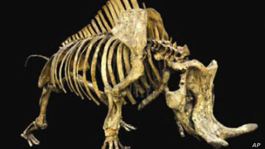 Newly Restored LA Museum Highlights Age of Mammals | Voice of ...