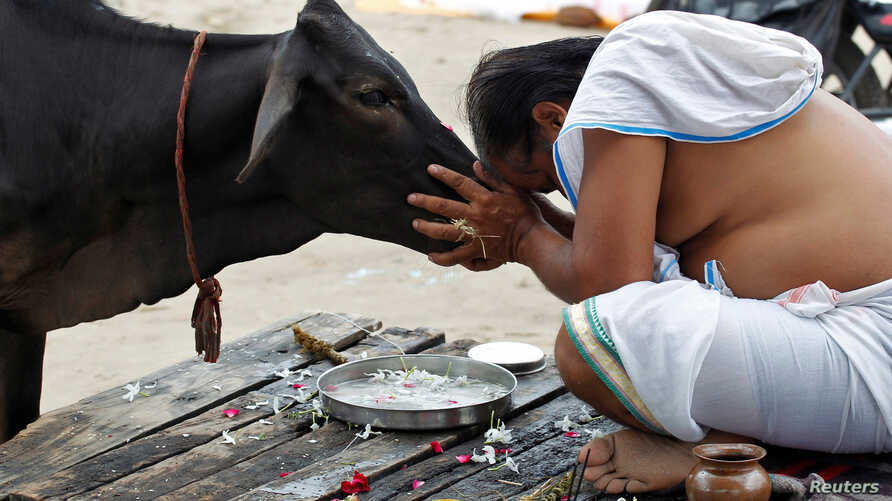 A Hindu devotee offers prayers to a cow after taking a holy dip in the waters of Sangam, a confluence of three rivers, the Ganga, the Yamuna and the mythical Saraswati, in Allahabad, India, Sept. 28, 2016.