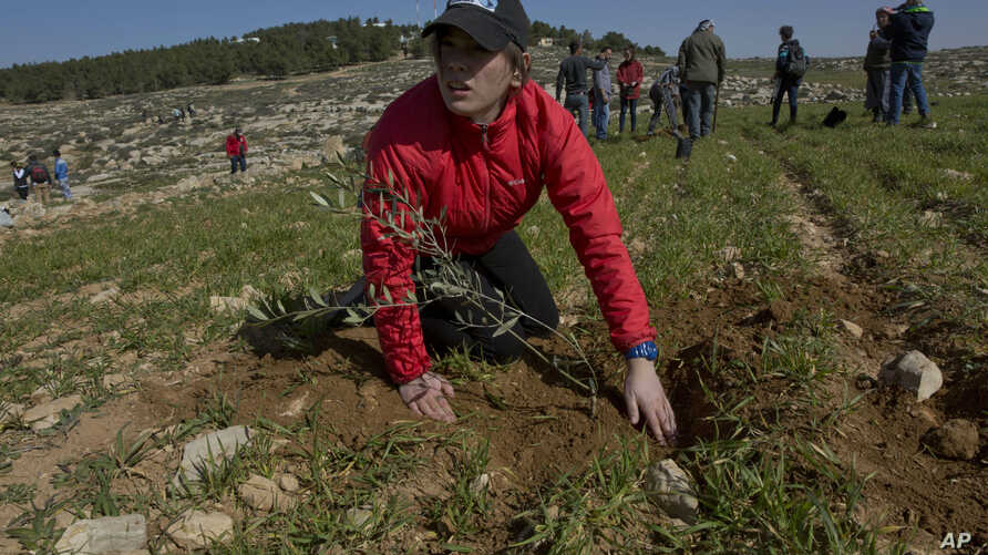 Young American rabbinical students plant olive trees, on the land near the West Bank village of Attuwani, south of Hebron, Jan. 25, 2019. In a departure from past programs that focused on strengthening ties with Israel and Judaism, the new crop of ra