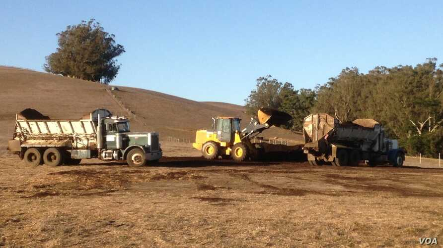 Truck being loaded with compost at the Stemple Creek Ranch in Tomales, California, which is participating in a decade-long trial carbon farming program.