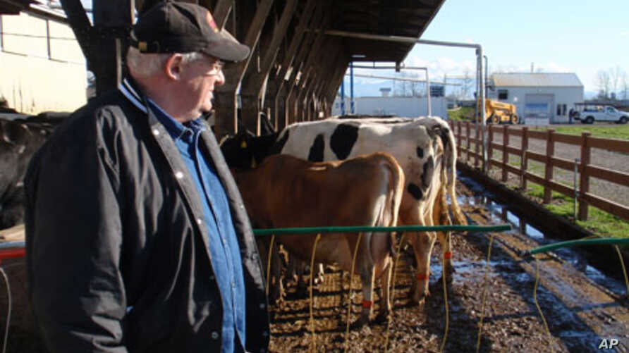 Dairy owner Darryl Vander Haak turns cow manure into  'bio-gas' which burns like natural gas in a small electric power plant right on his farm.