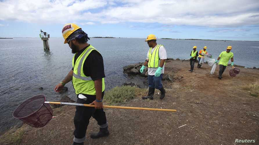 An environmental cleanup crew looks for dead marine life in Keehi Lagoon after a massive molasses spill from a Matson cargo ship in Honolulu, Hawaii, Sept. 12 ,2013.