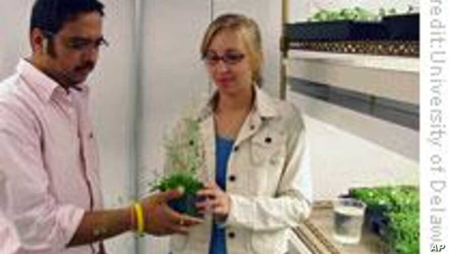 Plant Siblings Less Competitive than Plant Strangers