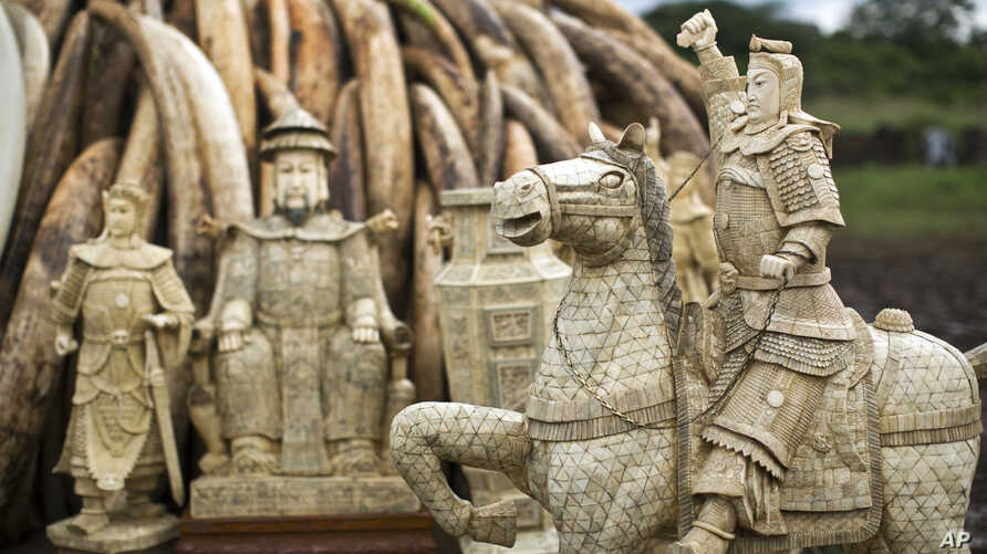 FILE - Confiscated ivory statues stand in front of one of around a dozen pyres of ivory, in Nairobi National Park, Kenya, April 28, 2016. A leading elephant conservation group said Wednesday, March 29, 2017 that the price of ivory in China has droppe