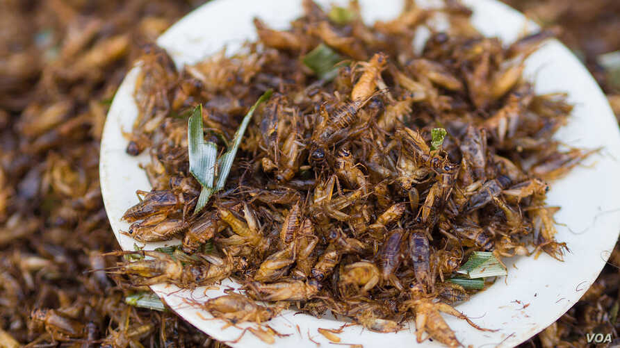 Chingrit thot is a Thai dish of deep-fried crickets. (Wikimedia Commons)