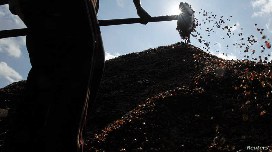 A man piles coffee cherries while processing them at a buying agent in Son La province, west of Hanoi, Nov. 19, 2012.