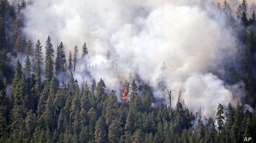 Smoke rises from a thickly timbered hillside as a tree goes up in flames in the hills above Twisp, Washington, Aug. 21, 2015.