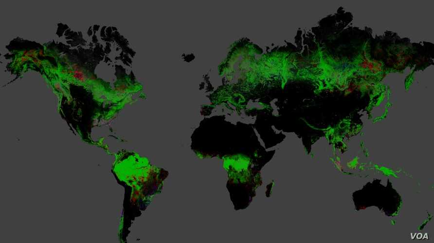 Using Landsat imagery and cloud computing, researchers mapped forest cover worldwide as well as forest loss and gain. Over 12 years, 888,000 square miles (2.3 million square kilometers) of forest were lost, and 309,000 square miles (800,000 square ki