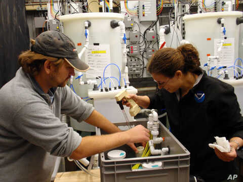 NOAA researchers  Mike Maher and Shallin Busch check the pH of a seawater tank.