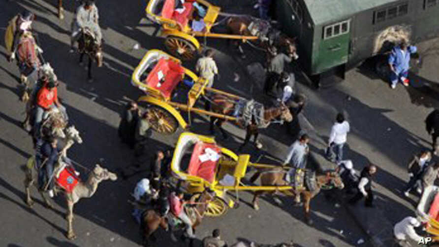 Pro-government demonstrators on horses, camels, and horse-drawn carriages near Tahrir square in Cairo, Egypt, Feb. 2, 2011.