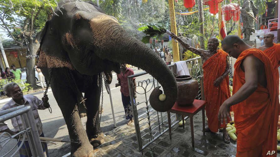 FILE - Sri Lankan Buddhist monks bless a domesticated elephant brought in for a Buddhist temple festival in Colombo, Sri Lanka, Feb. 24, 2013. For Buddhists, who make up 70 percent of the island's 20 million population, elephants are believed to have