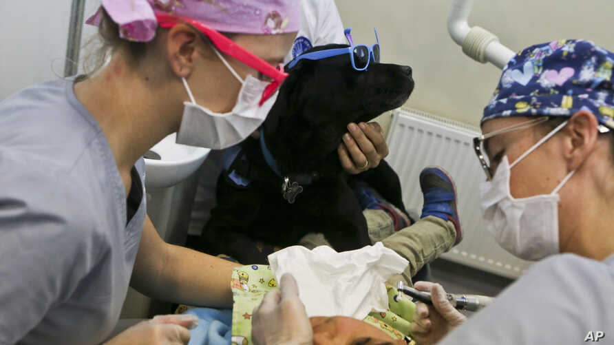 Rayen Antinao, 9, gets a dental check-up as therapy dog Zucca helps keep her calm at the Los Andes University Medical Center, on the outskirts of Santiago, Chile, April 28, 2017.