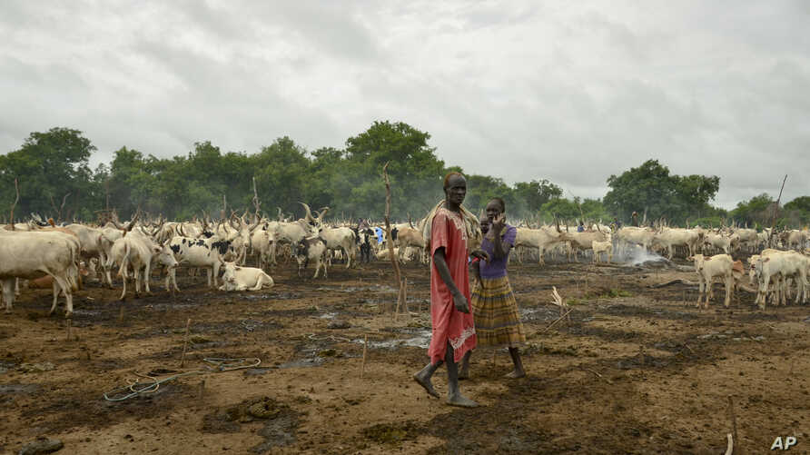 FILE - Cattle keepers walk past their herd at a camp outside the town of Rumbek, South Sudan, July 31, 2017. Cows are used for payments and dowries, which rights groups say helps perpetuate forced marriages, as families see daughters as a source of w