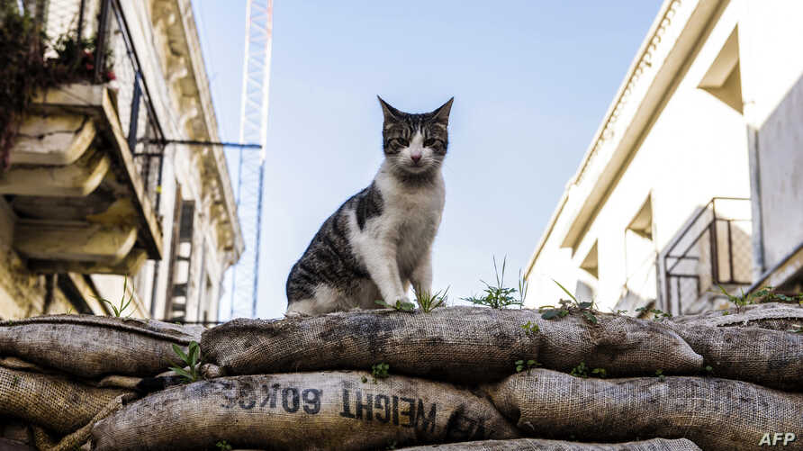 A picture shows a feral cat sitting on a sandbag barricade acting as a boundary for the green line, a UN controlled buffer zone, separating the divided Cypriot capital Nicosia.