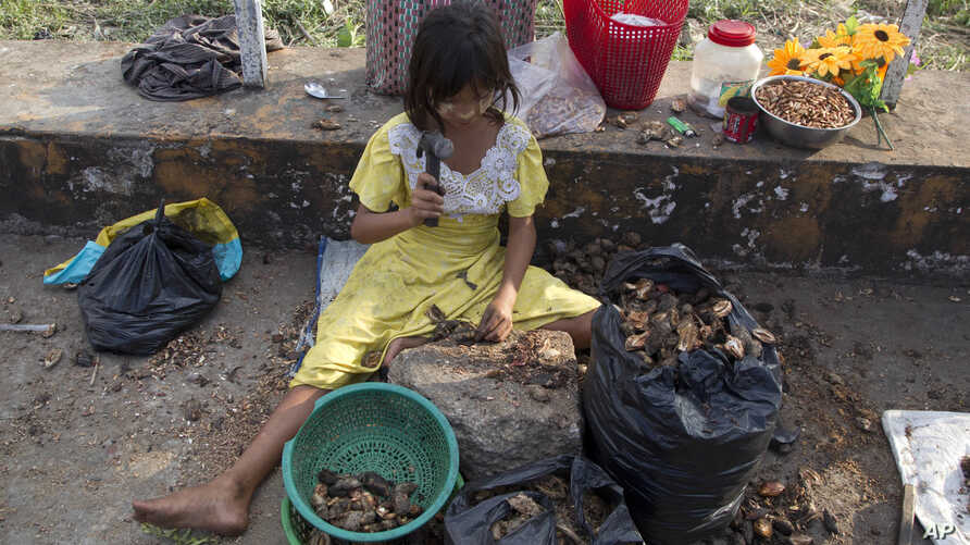 A girl uses a hammer to crack open shells for edible seeds to sell as snacks in Yangon, Myanmar, Nov. 1, 2018. A United Nations report says some 486 million people are malnourished in Asia and the Pacific, and progress in alleviating hunger is stalli
