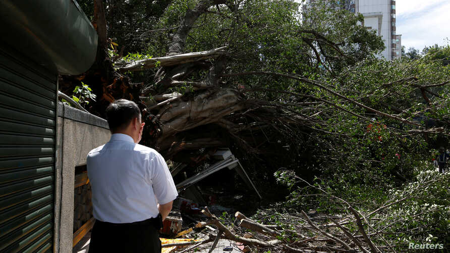A man reacts at the sight of a tree uprooted by strong winds brought by Typhoon Nesat in Taipei, Taiwan, July 30, 2017.