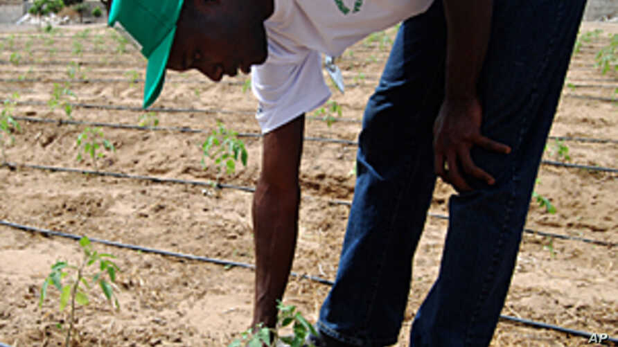 Senegalese farming students get hands-on experience with drip irrigation in the university's Israeli-funded 'field school'