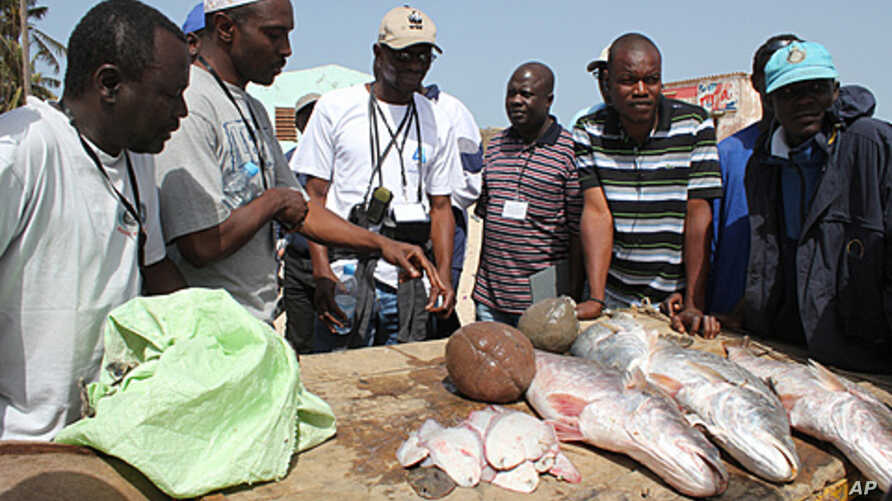 Senegalese fishermen talk with environmental groups about the changes they've seen in fishing stocks