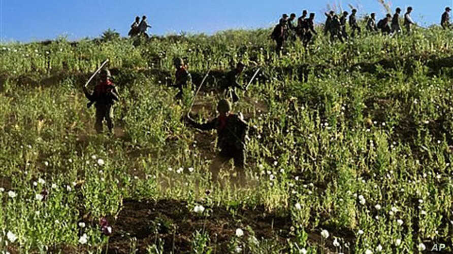 Soldiers and civilians use sticks to cut the opium poppies in a jungle field in Shan State, northeast of Burma (File)