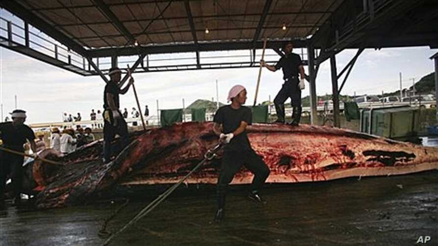 Baird's Beaked whale butchered in Wada, Japan, June 2007 (file photo).