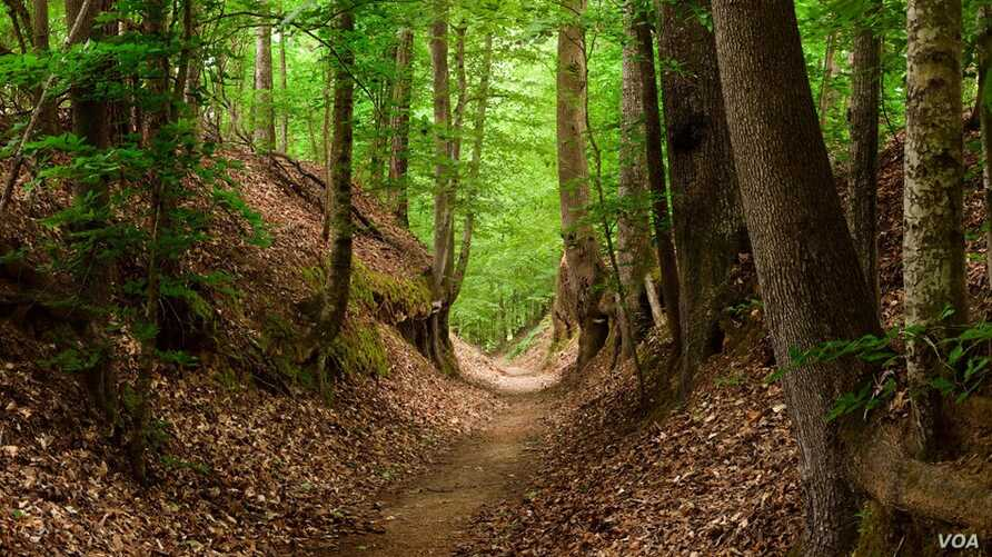 The 725 kilometer foot trail that became known as the Natchez Trace was a lifeline through the Old Southwest.