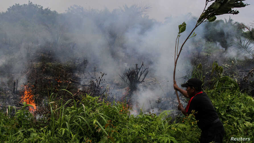 A man puts out a fire using a tree branch at a fire field in Pekanbaru, Indonesia's Riau province, Jan. 18, 2017, in this photo taken by Antara Foto.