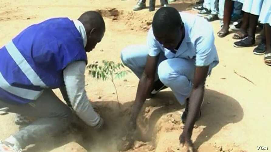 Students plant a tree in Pitoua town, near Garoua, Cameroon, Feb. 10 2018. (M. Kindzeka/VOA)