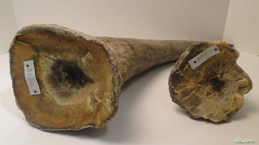 Rhino horns are pictured in this undated handout photo courtesy of the United States Attorney's Office, District of New Jersey.