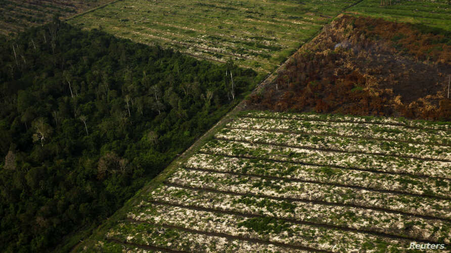 FILE - An aerial view of parts of a forest which has been burnt during haze in Indonesia's Riau province.