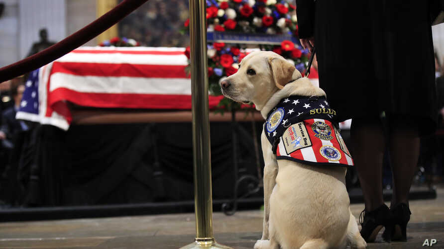 Sully, former President George H.W. Bush's service dog, pays his respect to President Bush as he lie in state at the U.S. Capitol in Washington, Dec. 4, 2018.