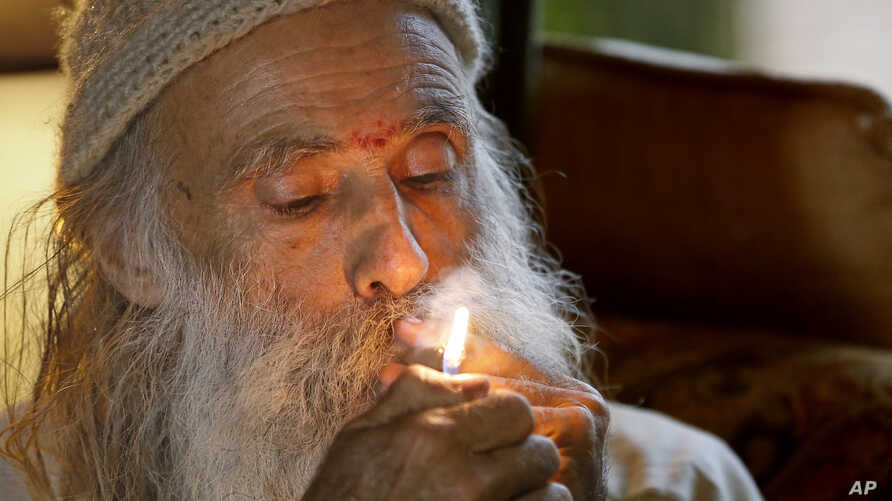 """Elections 2016 - Marijuana Emerald Triangle: In this Thursday, Oct. 13, 2016 photo, Swami Chaitanya lights a """"grower's joint"""" marijuana cigarette at his home near Laytonville, California."""