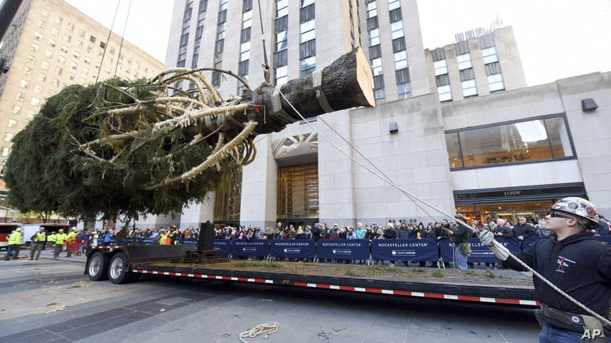 Workers prepare to raise the 2018 Rockefeller Center Christmas tree, a 72-foot tall, 12-ton Norway Spruce from Wallkill, N.Y., Saturday, Nov. 10, 2018, in New York.