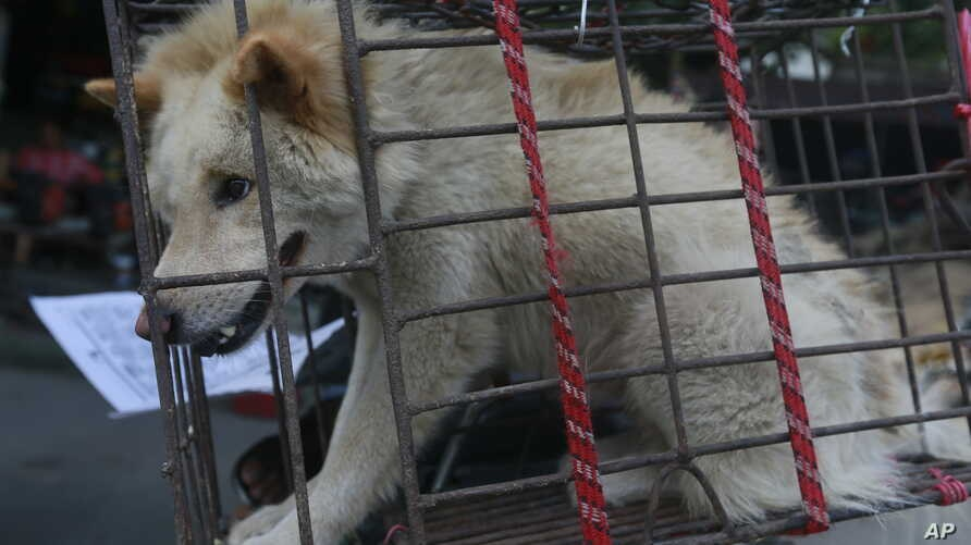 FILE -  - A dog in a small cage waits to be sold in Yulin Big Market.
