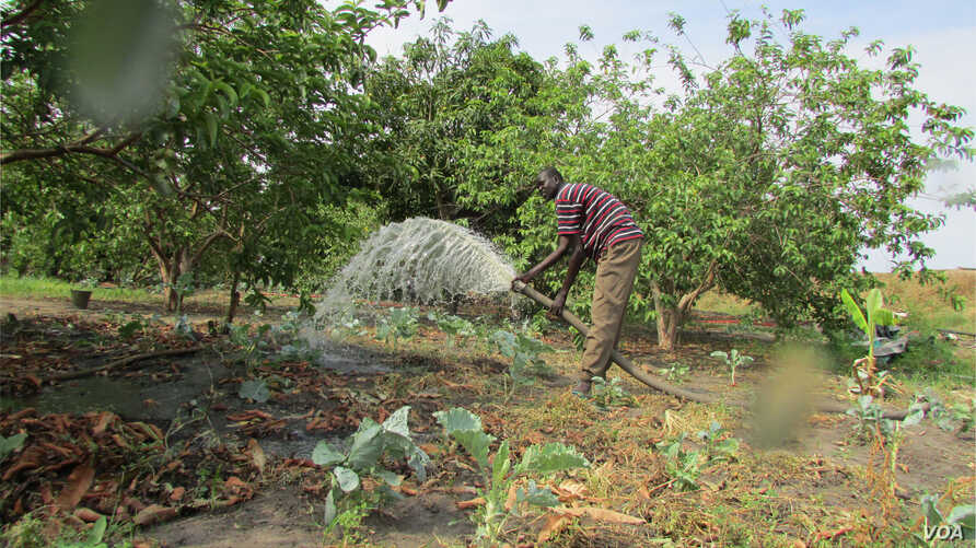 South Sudanese farmer Paul Alim Amuol waters crops on his 4.5-hectare farm in Bor, Jonglei state. Amuol says he needs better technology to boost production and to be able to get his crops to market before they go off.