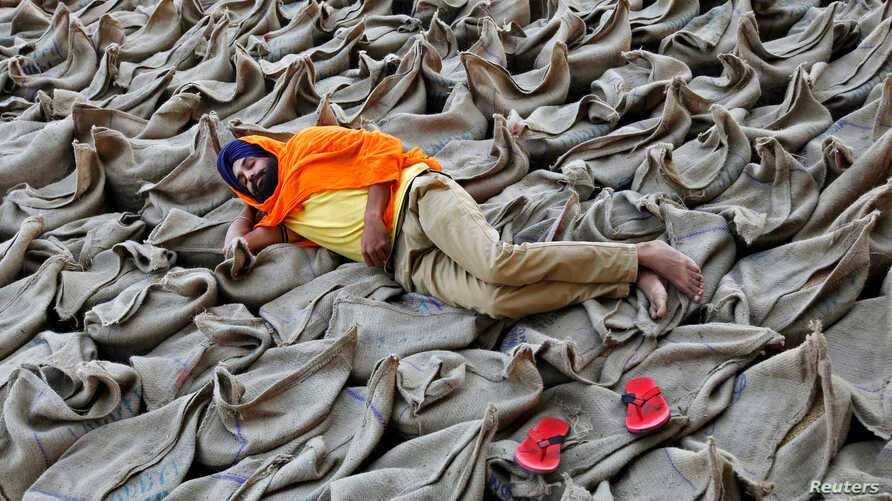 A farmer rests upon sacks filled with paddy at a wholesale grain market in Chandigarh, India, October 16, 2016.