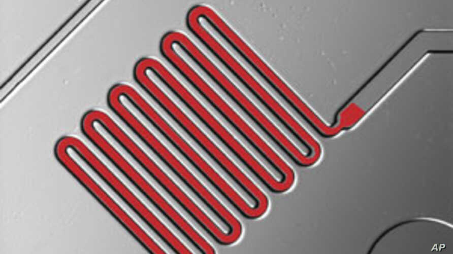 Illustration of blood traveling through microchannels in mChip