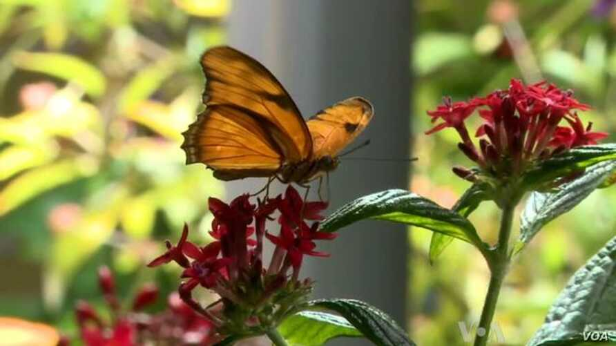 Exhibit Highlights Butterfly's Beauty, Diversity, Value to Ecosystem