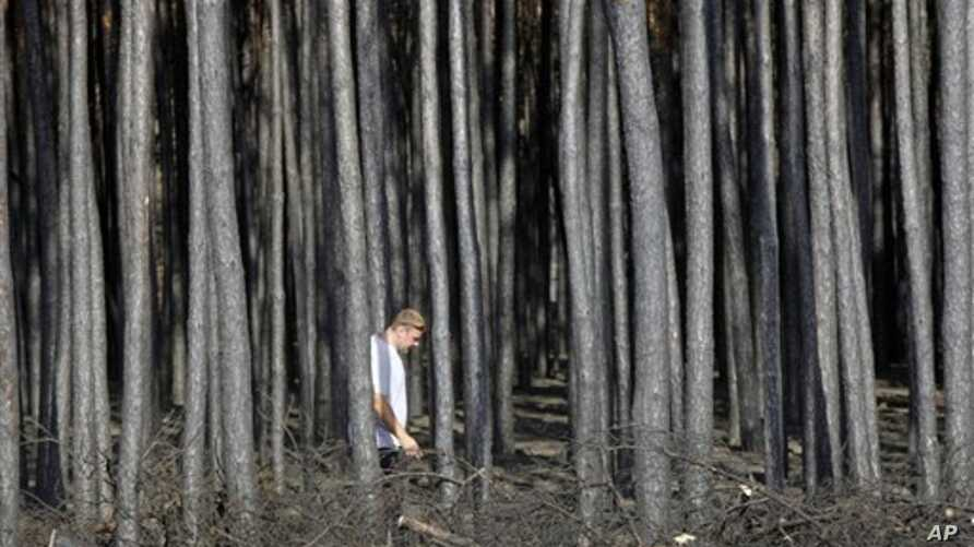 A man walks through the burned forest near the town of Voronezh some 500 km (294 miles) south of Moscow, Saturday, July 31, 2010.