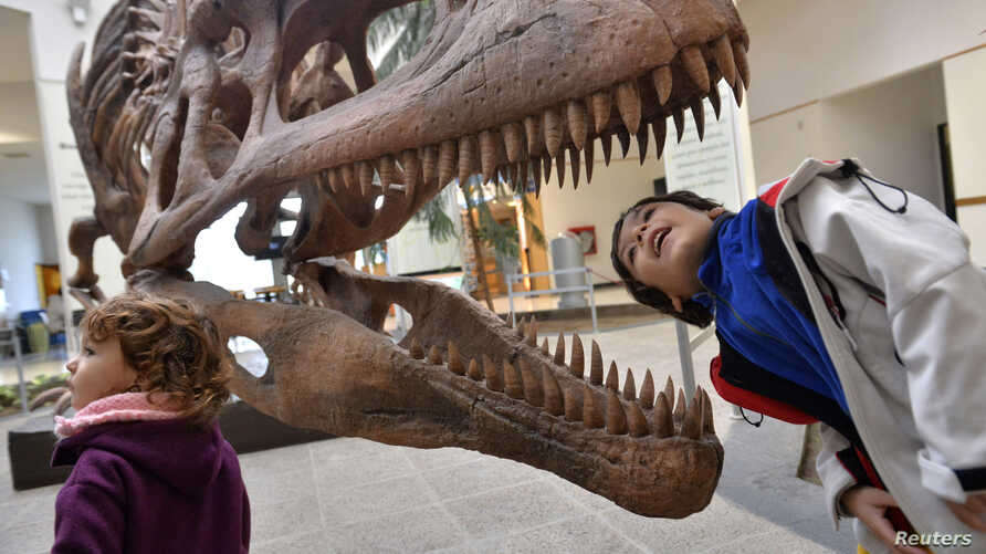 FILE - A boy looks inside the skull a Tyrannosaurus Rex replica at the Egidio Feruglio Museum in the Argentina's Patagonian city of Trelew, May 18, 2014.