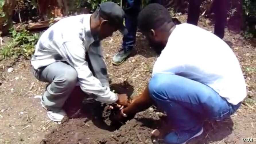 Young professionals plant a tree in Béret, southern Haiti for World Environment Day.